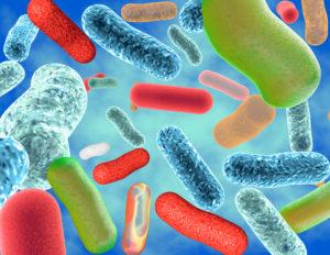 Good intestinal microflora and bacteria Lactobacillus and Bifidobacteria.